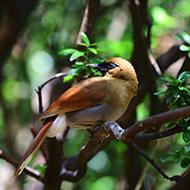 精彩抓拍多种小鸟