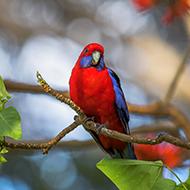 精彩抓拍罕见鸟类