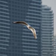 城市中的海鸥