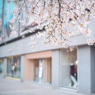湖城寻春 遇见樱花海棠