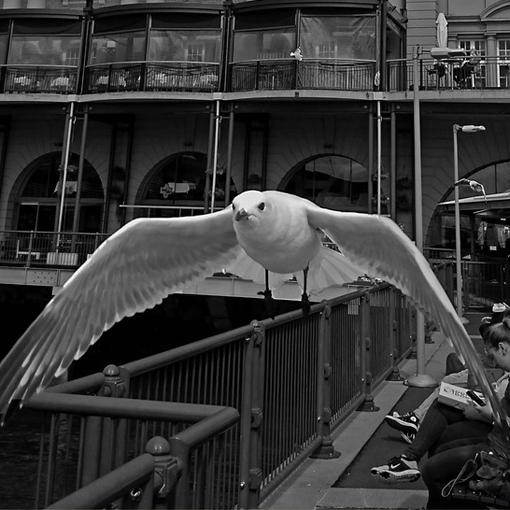 这里的海鸥不怕人