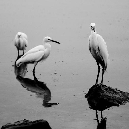 黑白世界里的鸟们