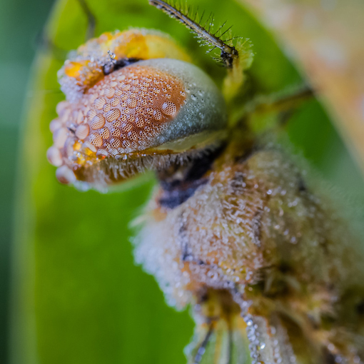 湿身的昆虫们