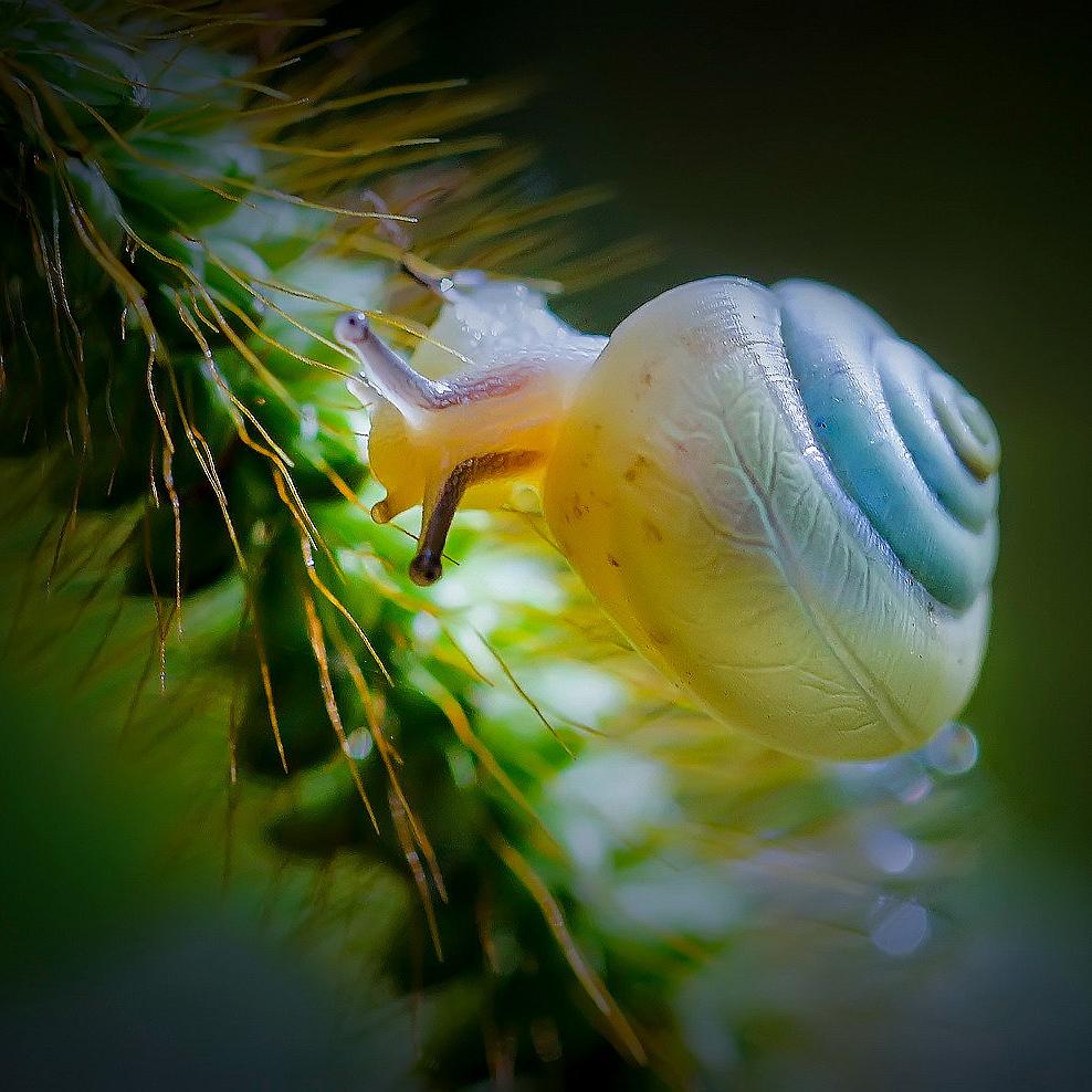 微距小品 蜗牛