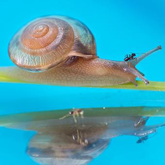 蜗牛与蚂蚁