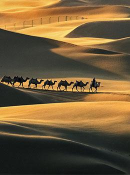 内蒙库布齐沙漠