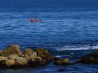 穿山甲1268:散落在太平洋畔的蓝宝石