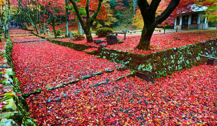 枫叶疯了地毯红了 日本之旅寻觅内心宁静(上)