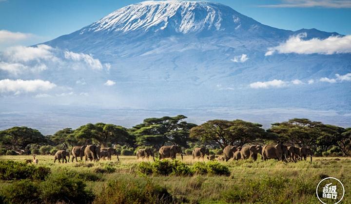 行摄肯尼亚 让镜头狩猎野性之美