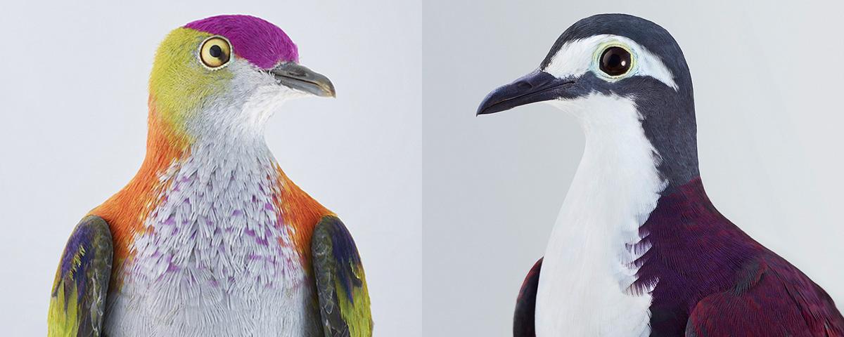 端庄精致的鸟类肖像