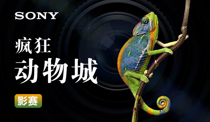 #索尼微单8月影赛#疯狂动物城