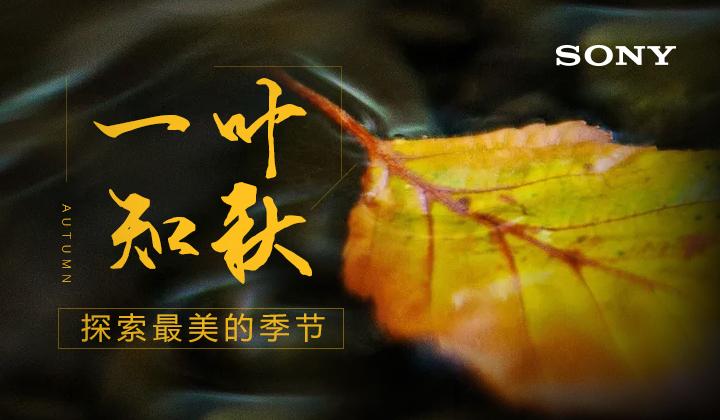 #索尼微单10月影赛#一叶知秋,探索最美的季节