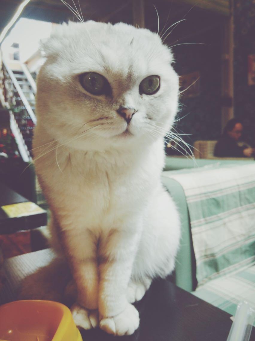壁纸 动物 狗 狗狗 猫 猫咪 小猫 桌面 852_1136 竖版 竖屏 手机