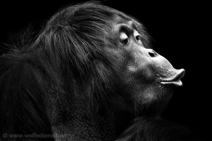 大师精彩作品 如何给动物拍艺术黑白照片