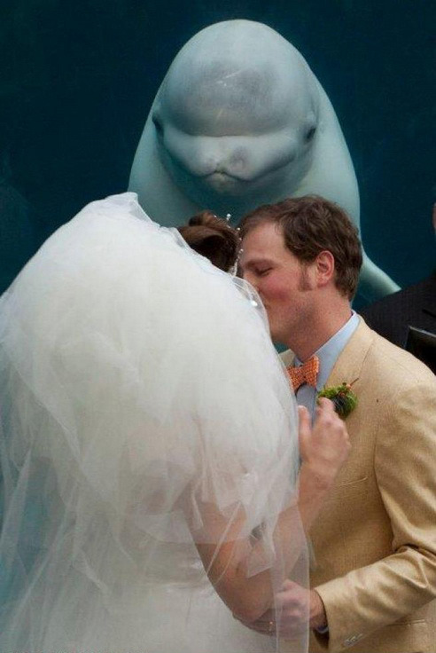 笑死人不偿命 20张令人难忘的婚礼照片
