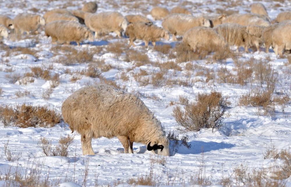 内蒙古的冬天,欢迎您 - 夏日晚风 - 夏日晚风的博客