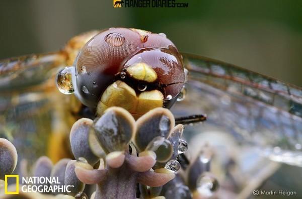 野性之美:国家地理野生动物摄影精粹版
