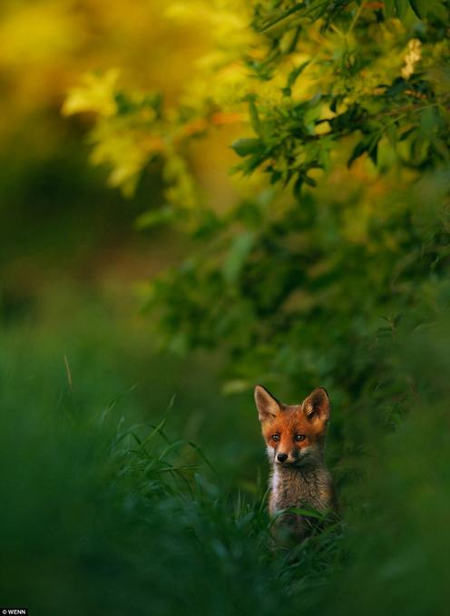 地球之美:2013年自然摄影师大赛作品
