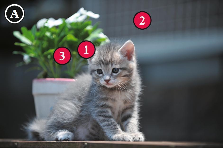 小猫的表情很可爱