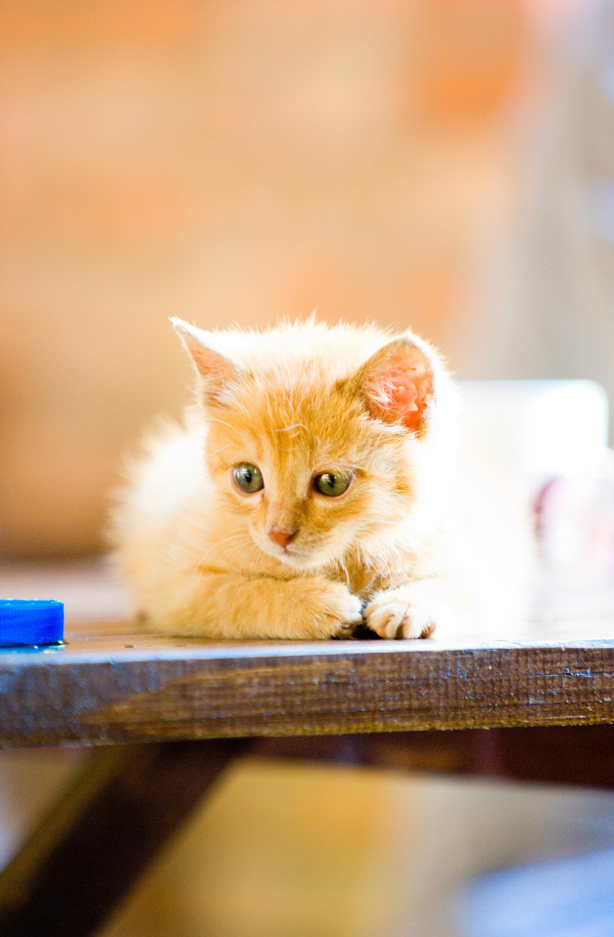 手绘可爱猫咪简图