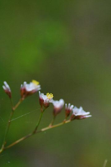 亲近自然微距摄影 如何留存那片花影叶色