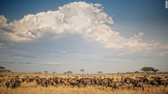 森林里被雾笼罩的寺庙尖塔,非洲平原上上百万的牛羚群,满天满星的夜空,这些都是在世界各地的美景。这是世界上有那么多的美景,我们却仅仅只是看到了其中的很小的一部分,甚至只是一些皮毛。这里CNN评选出了世界上最美丽的一些风景,如果你曾经有幸亲眼目睹过,那你绝对知道其中的震撼。   1、苏索斯维利沙丘,纳米比亚    苏索斯维利意为水的聚集地,千万不要以为这里都是水,如果你不想脱水的话,最好自己带上饮水。苏索斯维利沙丘是纳米尼亚最美丽的风景。 &#