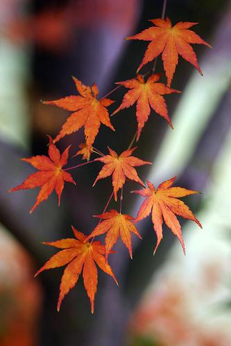 浪漫秋季预热课程 红叶拍摄技巧大公开