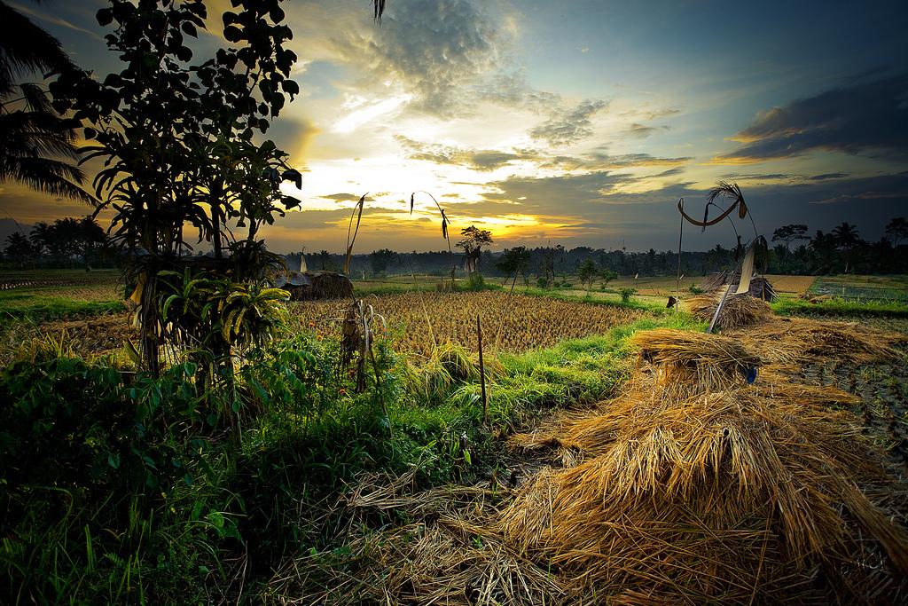 3.巴厘岛乌布区(印度尼西亚)