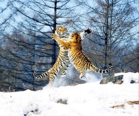 冬季去哈尔滨 10大必游景点攻略