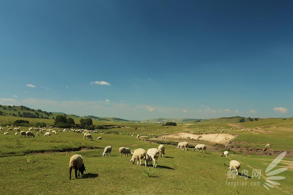 动物大迁徙之草原羊群