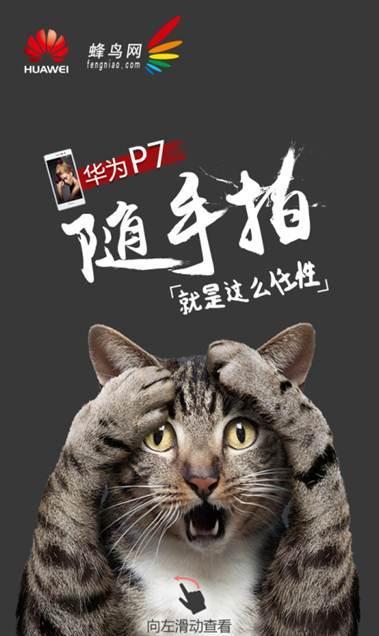 壁纸 动物 猫 猫咪 小猫 桌面 379_636 竖版 竖屏 手机