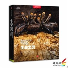 生命之灵:国际野生生物摄影年赛50年精选