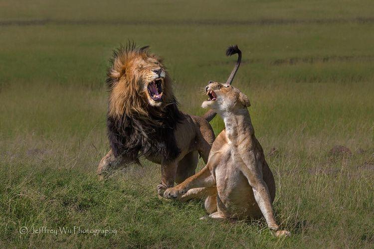 避开大迁徙—非洲野生动物摄影浅谈(一)