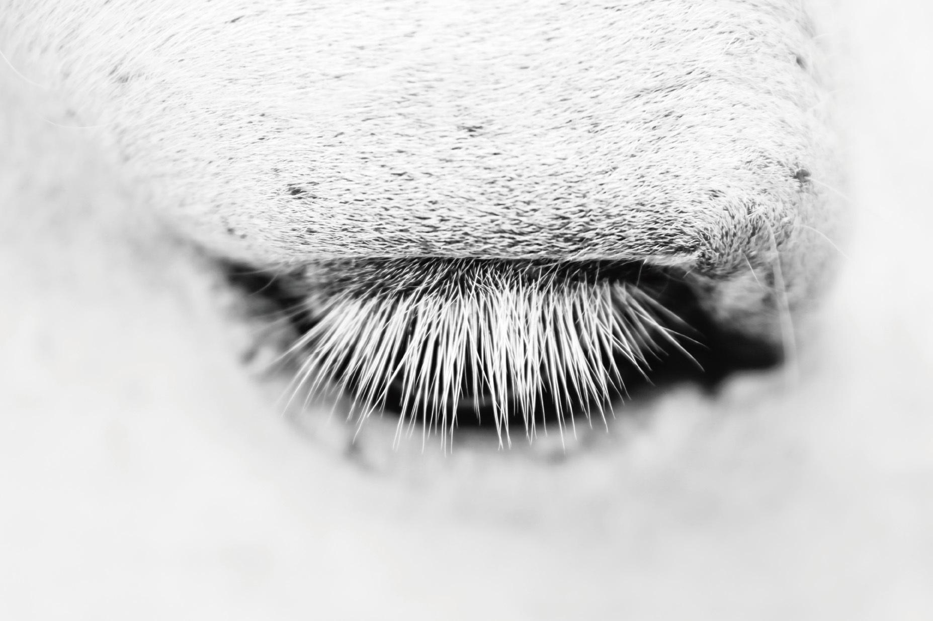 头拍摄动物的眼睛