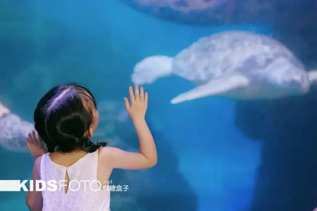 摄影师独家小秘籍 如何在昏暗的海洋馆拍宝贝