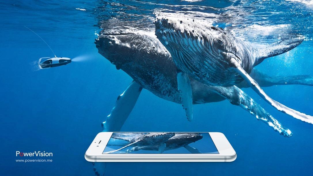 壁纸 动物 海洋动物 鲸鱼 桌面 1087_612