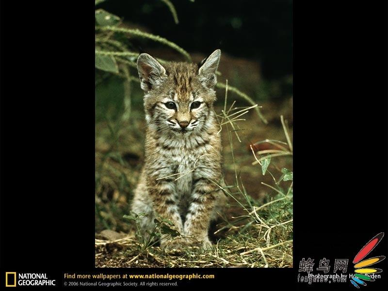 超可爱的动物宝宝