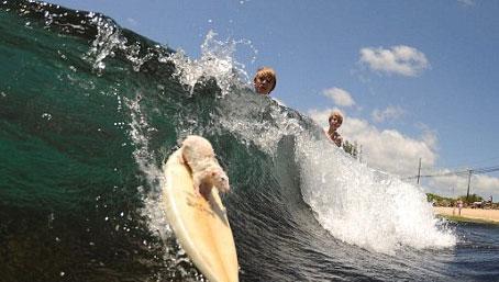 实拍疯狂的冲浪耗子