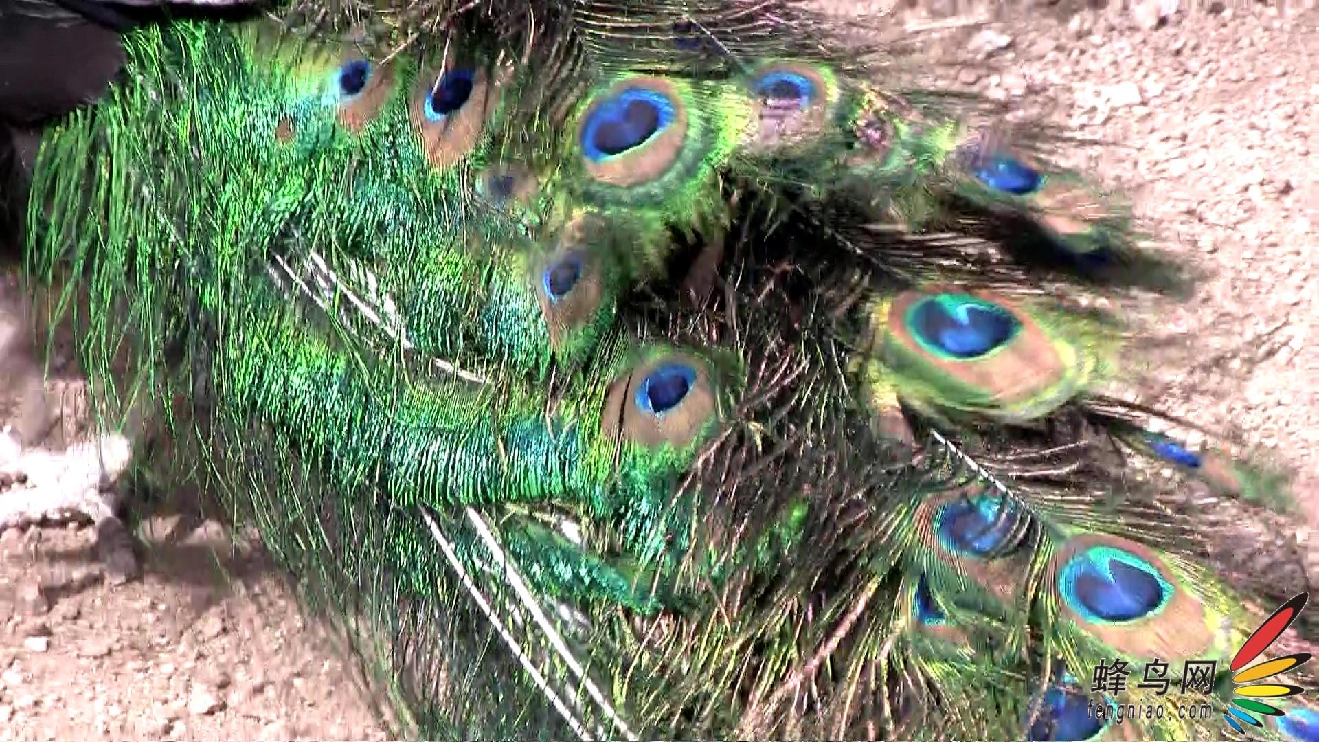 佳能春季dv新品八达岭野生动物园交流会