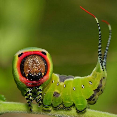 感受大自然 微距昆虫摄影技巧谈