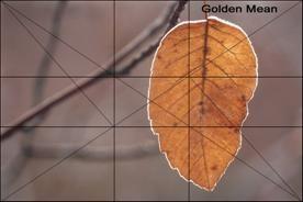 摄影构图与视觉设计要素