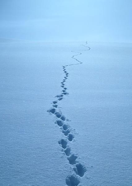 下雪了 为冰天雪地拍佳作献计