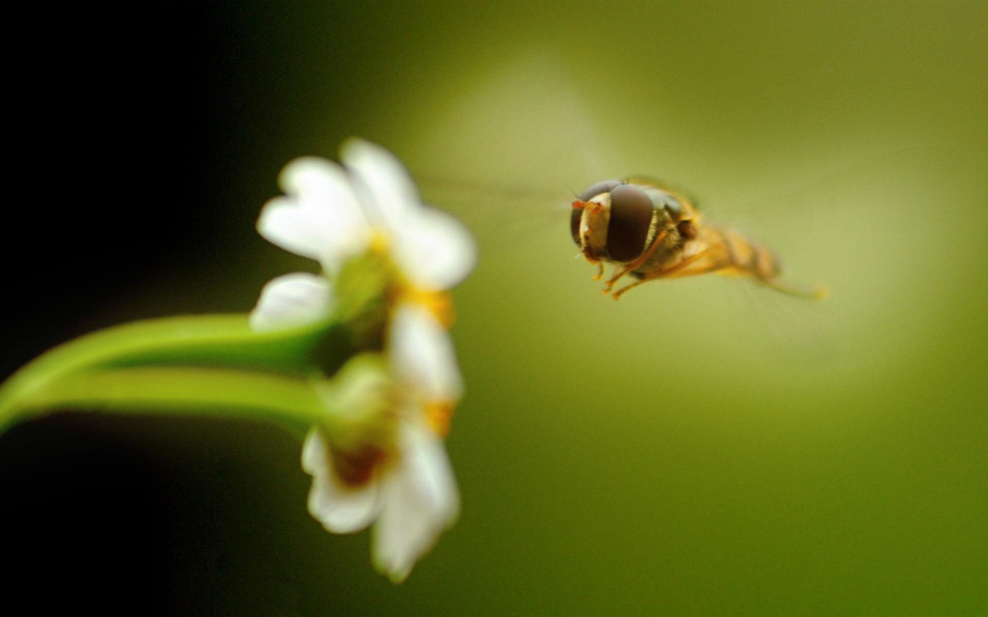 大自然写真 带你认识生态摄影的奥秘