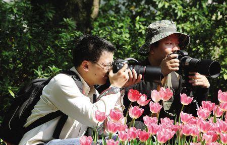 春季拍花摄影器材推荐
