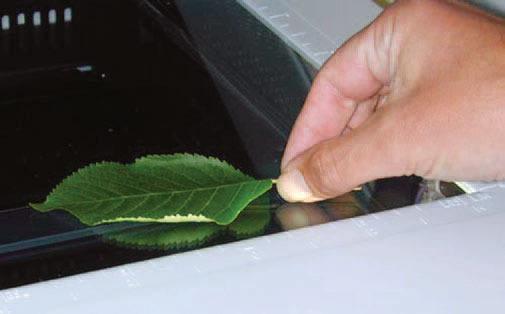 有趣的技巧:如何清晰的扫描树叶