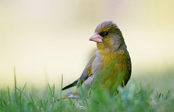 鸟类摄影实用教程