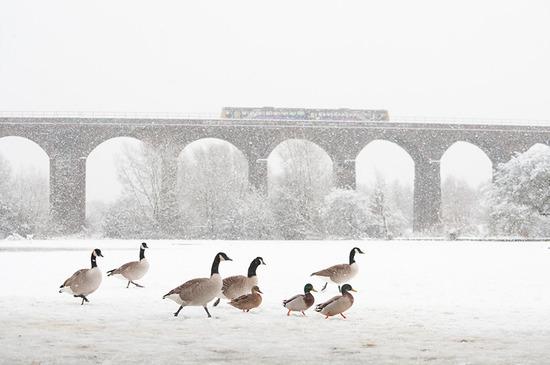 英国野生动物摄影大赛获奖作品欣赏