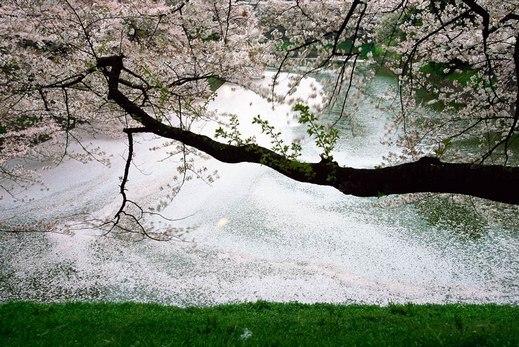 """落""""樱""""缤纷 拍摄樱花不可不知的5要素"""