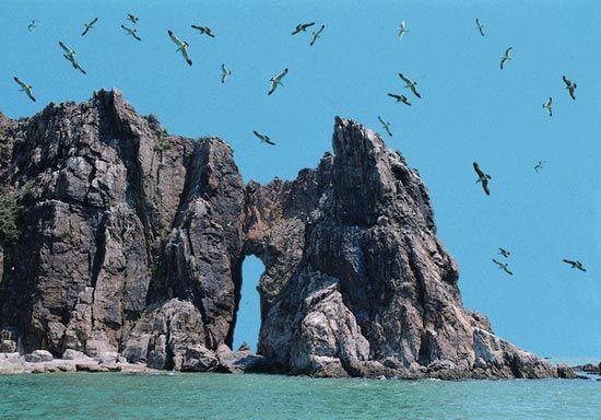 环境保护:不要收集,带走或损坏海里任何生物和非生物,如珊瑚,贝类