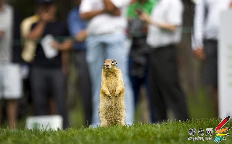 野生动物图片精选 走进奇趣自然世界
